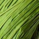 Raphia Naturel Ruban Coloris Vert Clair (50 gr)