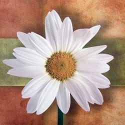 """Image 3 D   """"Marguerite"""" 24 x 30 (vendue à l'unité) pour tableau technique du 3D"""