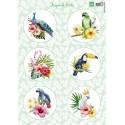 Planche Images Motifs  Tropical Birds