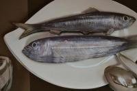 ATELIER HOME DECO : Tableau 3D Sépia : De la Mer à l'assiette , TUTORIEL